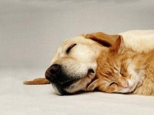 cane-e-gatto