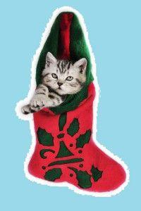 gatto-calza