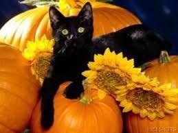 Halloween...buona serata a tutte le ombre