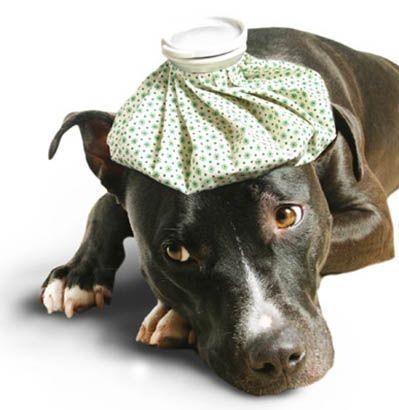 assicurazione-cani-gatti