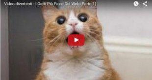 gatti-divertenti-e1440489203936