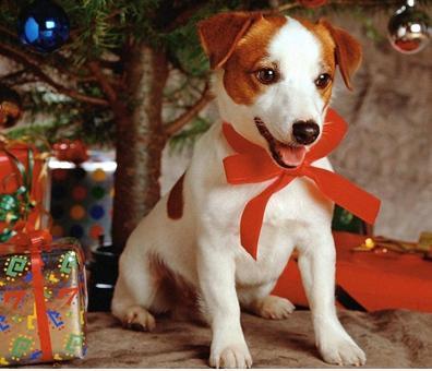 Sms Per Auguri Di Natale.Sms Natale La Mia Ombra
