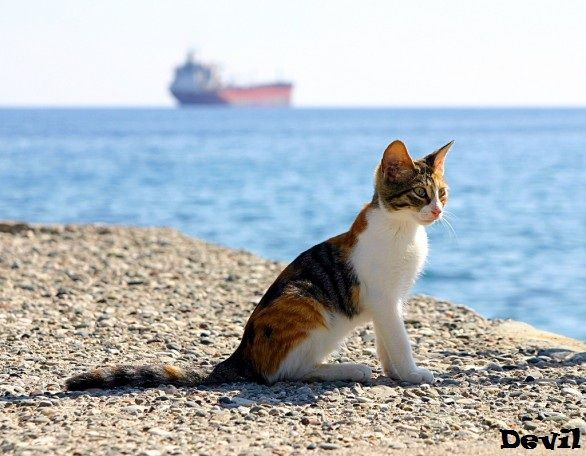Cat Vacation Gif