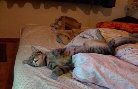 Un gatto sul letto la mia ombra - Toro e sagittario a letto ...