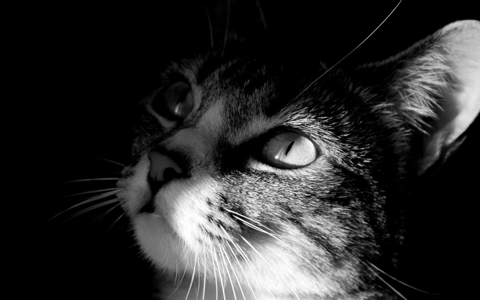Aforismi sui gatti - La mia Ombra